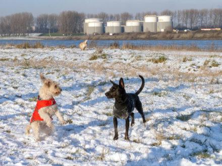 Smilla im Schneespiel