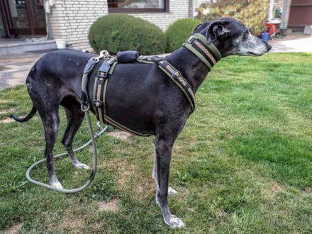Kundenhunde