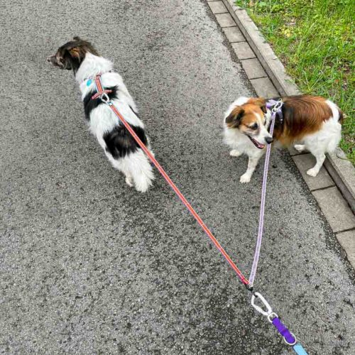 Koppel für zwei Hunde, schwarz photo review