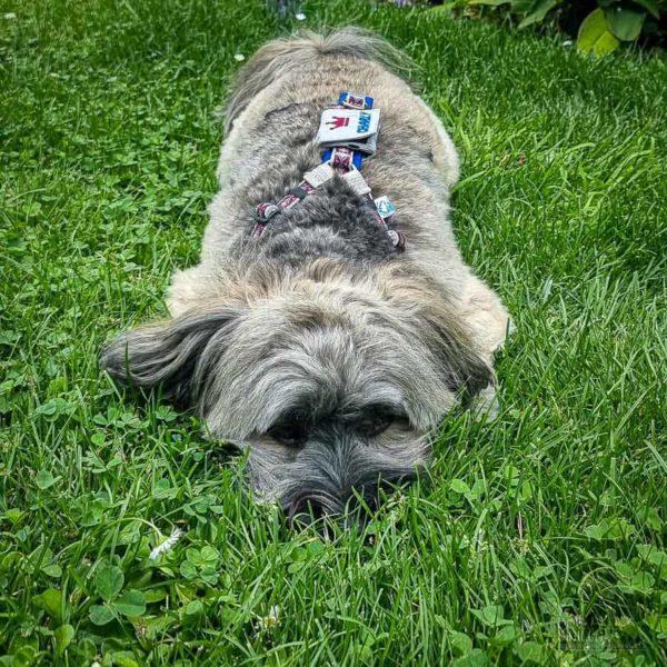 Charly mit Dog-Smilla Hundemarkentasche
