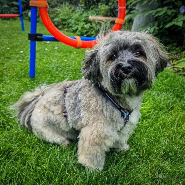 Charly im Dog-Smilla-Geschirr