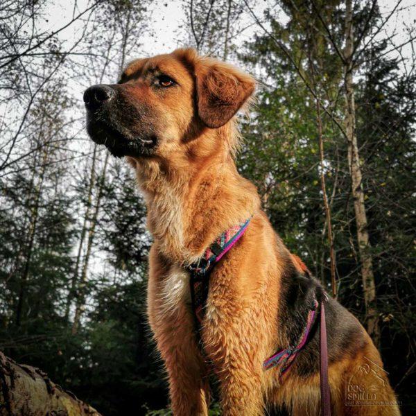 Kundenhund Cloe